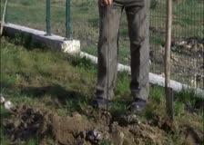 Липи и кестени ще растат в двора на Центъра от семеен тип